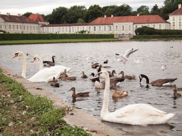 Schloss Nymphenburg is home to many beautiful birds